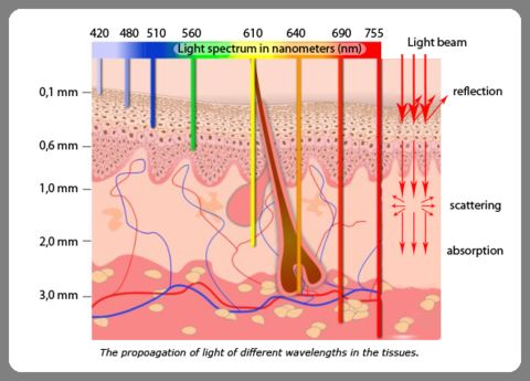 light_skin_absorption